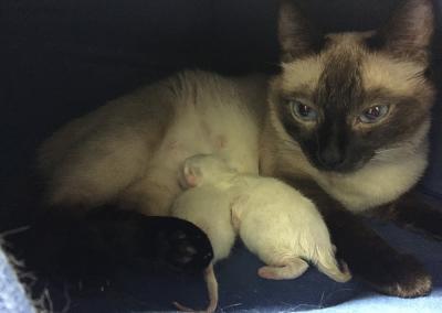 mamma Giulia con i pupi appena nati